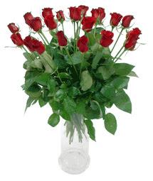 Konya kaliteli taze ve ucuz çiçekler  11 adet kimizi gülün ihtisami cam yada mika vazo modeli