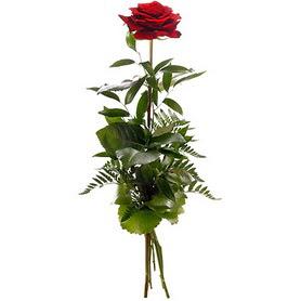 Konya 14 şubat sevgililer günü çiçek  1 adet kırmızı gülden buket