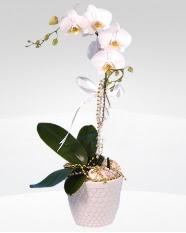 1 dallı orkide saksı çiçeği  Konya 14 şubat sevgililer günü çiçek