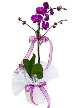 Tek dallı mor orkide  Konya kaliteli taze ve ucuz çiçekler