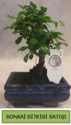 Bonsai ithal görsel minyatür japon ağacı  Konya online çiçekçi , çiçek siparişi