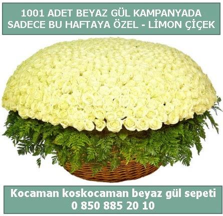 1001 adet beyaz gül sepeti özel kampanyada  Konya çiçek online çiçek siparişi