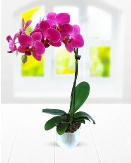Tek dallı mor orkide  Konya güvenli kaliteli hızlı çiçek