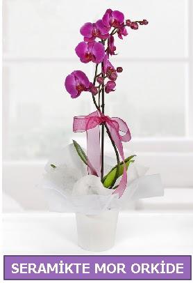 Seramik içerisinde birinci kalite tek dallı mor orkide  Konya hediye sevgilime hediye çiçek