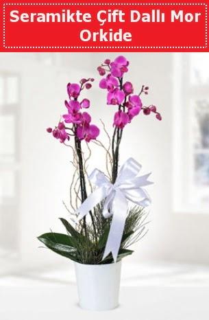 Seramikte Çift Dallı Mor Orkide  Konya internetten çiçek satışı