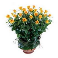 Konya hediye çiçek yolla  10 adet sari gül tanzim cam yada mika vazoda çiçek