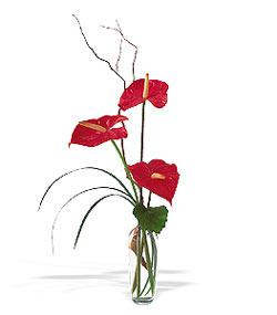 Konya çiçek gönderme sitemiz güvenlidir  cam yada mika Vazoda 3 adet  antoryum