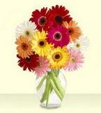 Konya anneler günü çiçek yolla  cam yada mika vazoda 15 özel gerbera