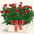 Konya hediye sevgilime hediye çiçek  11 adet kirmizi gül sepette