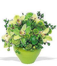 cam yada mika vazoda 5 adet orkide   Konya 14 şubat sevgililer günü çiçek