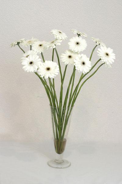 Konya online çiçek gönderme sipariş  cam vazo içerisinde 17 adet sade gerbera