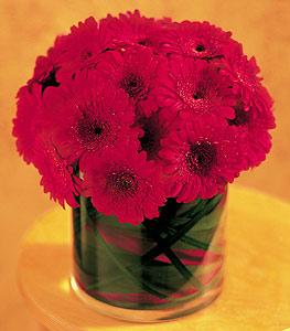 Konya online çiçekçi , çiçek siparişi  23 adet gerbera çiçegi sade ve sik cam içerisinde
