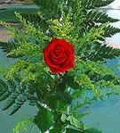 1 adet kirmizi gül buketi   Konya çiçek satışı