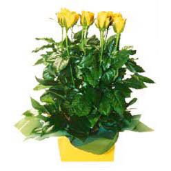 11 adet sari gül aranjmani  Konya 14 şubat sevgililer günü çiçek