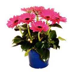 vazo içerisinde gerbera çiçekleri   Konya çiçek , çiçekçi , çiçekçilik