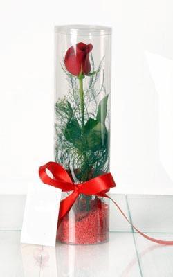 Konya çiçek servisi , çiçekçi adresleri  Silindir vazoda tek kirmizi gül