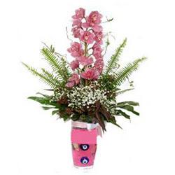 Konya çiçek yolla , çiçek gönder , çiçekçi   cam yada mika vazo içerisinde tek dal orkide çiçegi