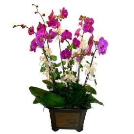 Konya ucuz çiçek gönder  4 adet orkide çiçegi