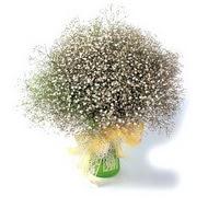 Konya online çiçek gönderme sipariş  cam yada mika vazo içerisinde cipsofilya demeti