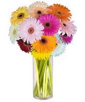 Konya çiçekçi telefonları  Farkli renklerde 15 adet gerbera çiçegi