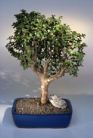 Konya çiçek mağazası , çiçekçi adresleri  ithal bonsai saksi çiçegi  Konya çiçek gönderme