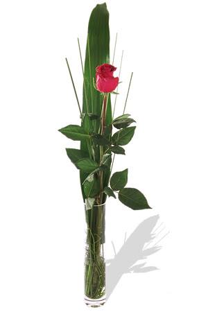 1 adet cam vazo içerisinde kirmizi gül  Konya yurtiçi ve yurtdışı çiçek siparişi