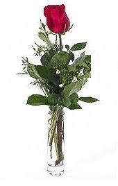 Vazo içerisinde 1 adet kirmizi gül  Konya hediye çiçek yolla