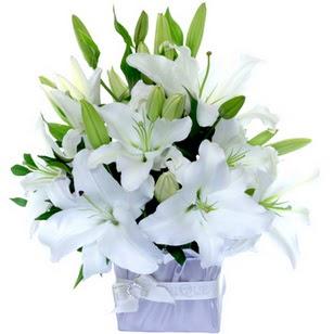 Konya çiçek servisi , çiçekçi adresleri  2 dal cazablanca vazo çiçeği
