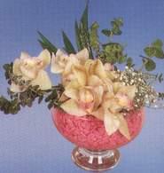 Konya online çiçek gönderme sipariş  Dal orkide kalite bir hediye