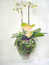 Konya güvenli kaliteli hızlı çiçek  Cam yada mika vazoda özel orkideler