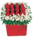 Konya çiçek mağazası , çiçekçi adresleri  Kare cam yada mika içinde kirmizi güller - anneler günü seçimi özel çiçek