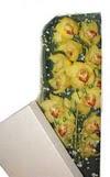Konya çiçek mağazası , çiçekçi adresleri  Kutu içerisine dal cymbidium orkide