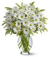 Vazo içerisinde beyaz krizantem çiçekleri  Konya İnternetten çiçek siparişi