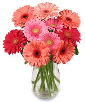 vazo içerisinde 13 adet gerbera çiçeği  Konya çiçek gönderme sitemiz güvenlidir