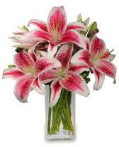 Vazo içerisinde 5 dal kazablanka çiçeği  Konya hediye çiçek yolla