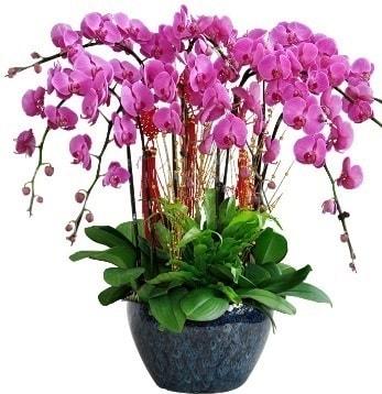 9 dallı mor orkide  Konya çiçek siparişi sitesi