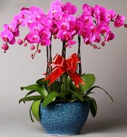 7 dallı mor orkide  Konya internetten çiçek siparişi