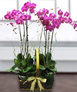 4 dallı mor orkide  Konya cicekciler , cicek siparisi