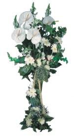 Konya online çiçek gönderme sipariş  antoryumlarin büyüsü özel