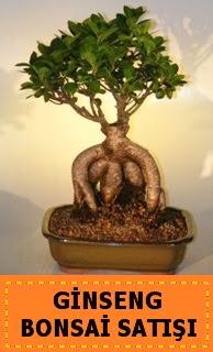 Ginseng bonsai satışı japon ağacı  Konya ucuz çiçek gönder