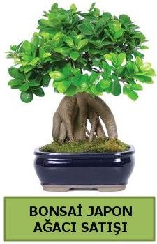 Bonsai japon ağacı satışı  Konya güvenli kaliteli hızlı çiçek