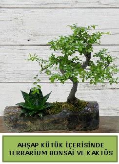 Ahşap kütük bonsai kaktüs teraryum  Konya çiçekçi telefonları