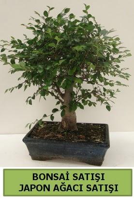 Minyatür bonsai japon ağacı satışı  Konya çiçek online çiçek siparişi