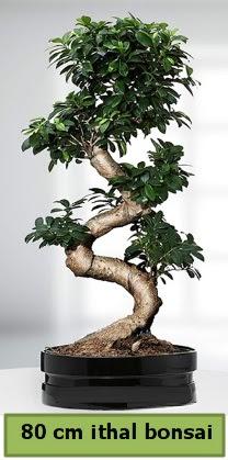 80 cm özel saksıda bonsai bitkisi  Konya kaliteli taze ve ucuz çiçekler