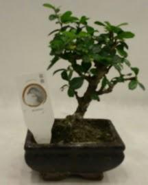 Küçük minyatür bonsai japon ağacı  Konya çiçek mağazası , çiçekçi adresleri