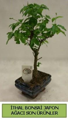 İthal bonsai japon ağacı bitkisi  Konya çiçekçiler