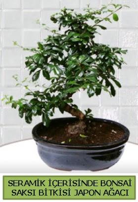 Seramik vazoda bonsai japon ağacı bitkisi  Konya çiçek gönderme sitemiz güvenlidir