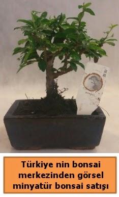 Japon ağacı bonsai satışı ithal görsel  Konya çiçek servisi , çiçekçi adresleri