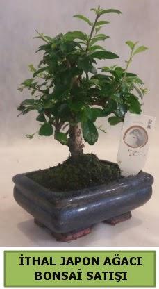 İthal japon ağacı bonsai bitkisi satışı  Konya kaliteli taze ve ucuz çiçekler