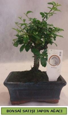Minyatür bonsai ağacı satışı  Konya çiçek mağazası , çiçekçi adresleri